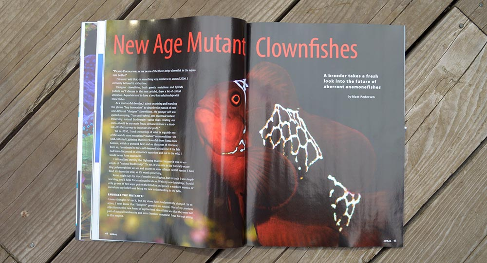 New Age Mutant Clownfishes - Matt Pedersen looks at the plethora of designer clownfishes who owe their unique looks to genetic mutations.