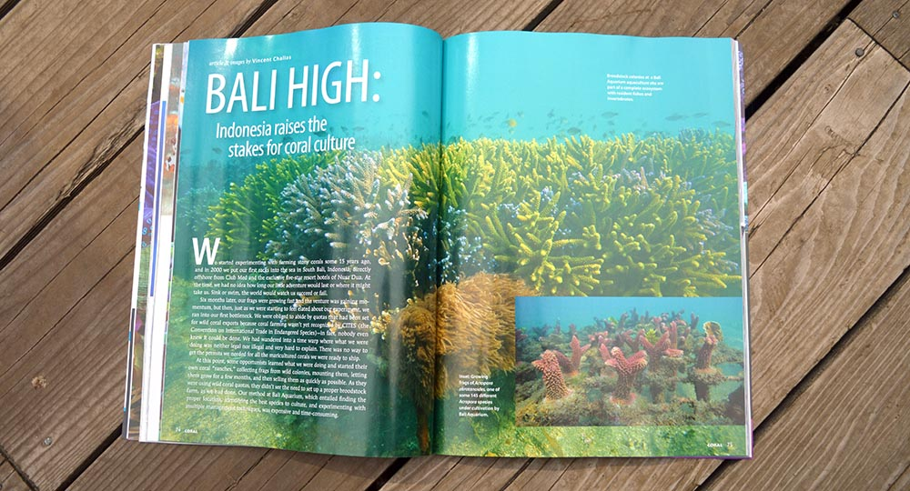 Bali High - a look at coral mariculture in Bali by Vincent Chalias