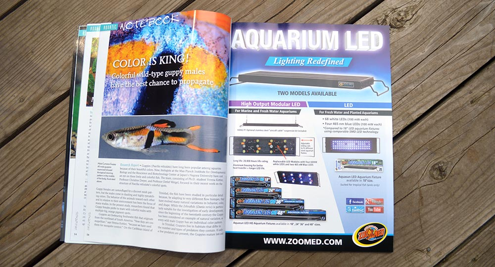 Aquatic Notebook - Color Is King!