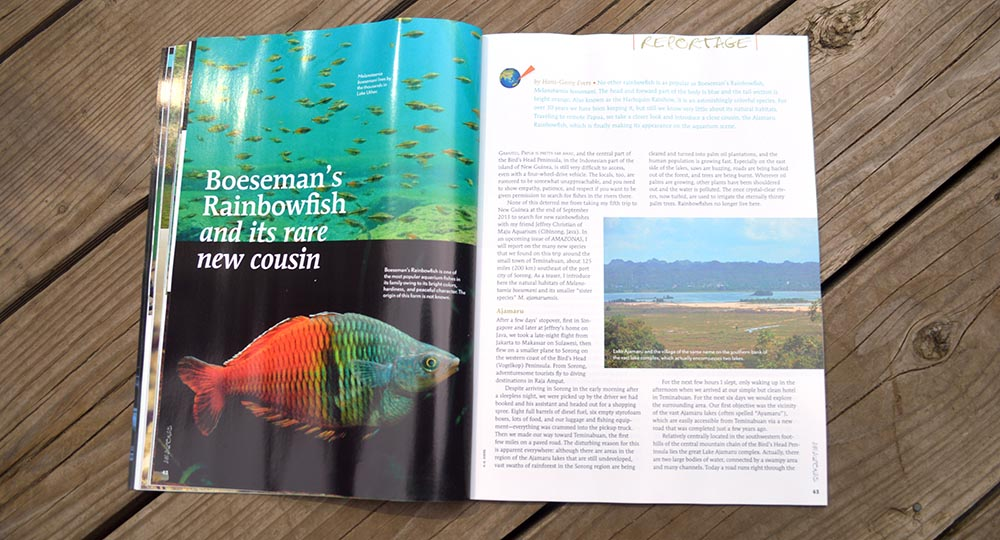 Boeseman's Rainbowfish and it's Rare New Cousin, by Hans-Georg Evers