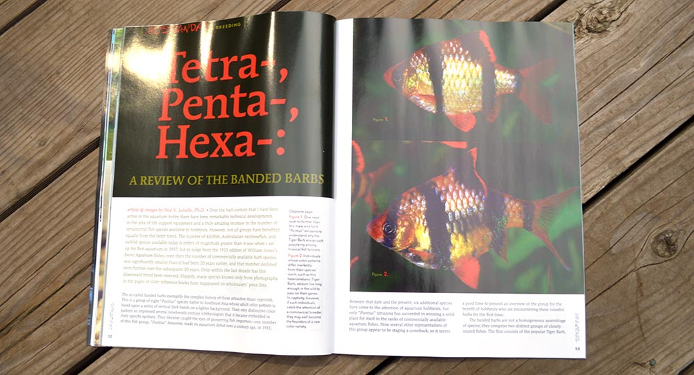 Tetra-, Penta-, Hexa-: A Review of the Banded Barbs, by Paul V. Loiselle, Ph.D.