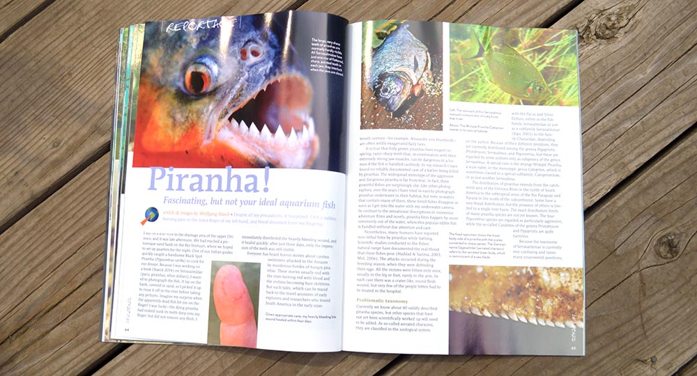 Piranha! Fascinating, but not your ideal aquarium fish, by Wolfgang Staeck