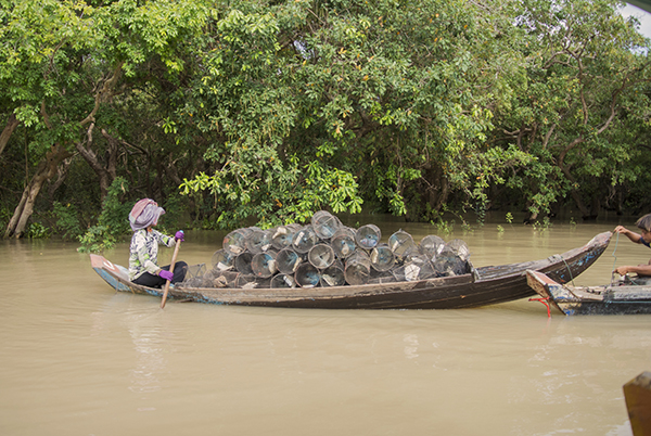 Overfishing in the flooded forest around the Tonle Sap Lake is a major threat to D. pulcher