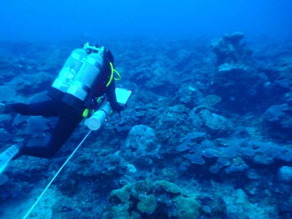 A Diver Conducting A Transect Survey.