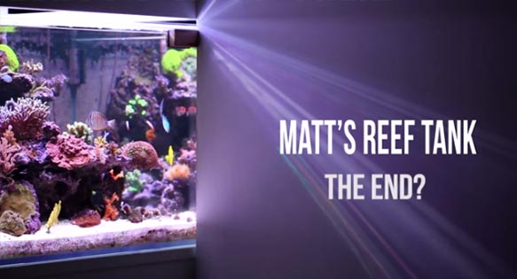 Producers of Matt's Reef - an online video series we were just getting into - announce its cancellation.