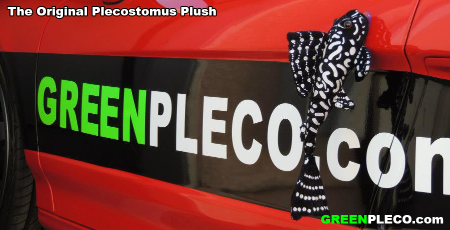 "The original ""Plush Pleco"" from GreenPleco.com"