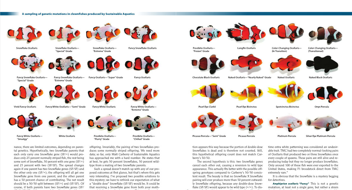Counting the clownfish, like these on pages 56 and 57 from Sustainable Aquatics, wasn't overly taxing...