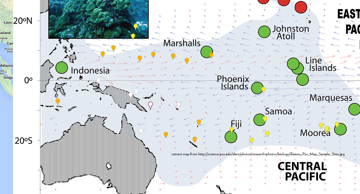Biogeographic distribution of Amphiprion chrysopterus phenotypic groups overlaying a map of Pacific Ocean currrents - current map from http://science.psu.edu/alert/photos/research-photos/biology/Baums_Pac_Map_Sample_Sites.jpg