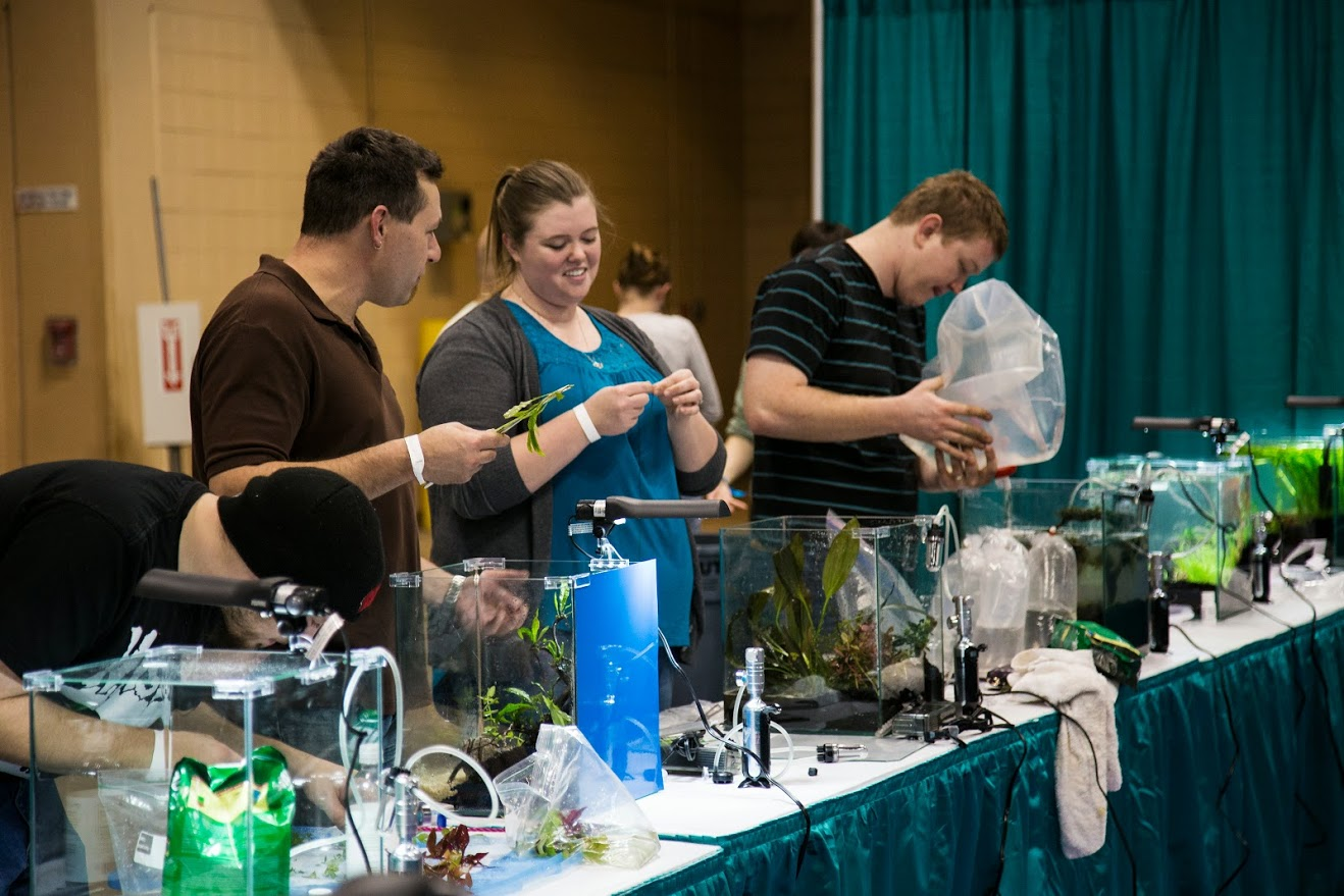 Aquascaping Live! competitors at work during Aquatic Experience - Chicago 2014. Image by Dan Woudenberg/LuCorp Marketing for the World Pet Association.