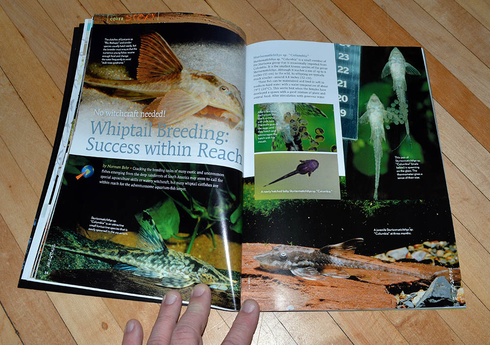 """No witchcraft needed! Whiptail Breeding: Success within Reach"", our second cover feature by Norman Behr"