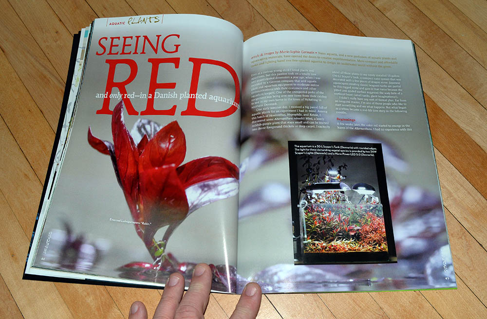"""Seeing Red, and only red—in a Danish planted aquarium"" features the all red planted aquarium of Marie-Sophie Germain"
