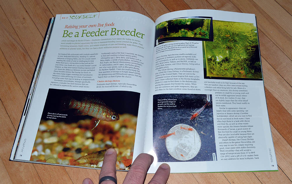 """Be a Feeder Breeder; Raising your own live foods"" by Rachel O'Leary , looks at raising popular invertebrates as feeds."