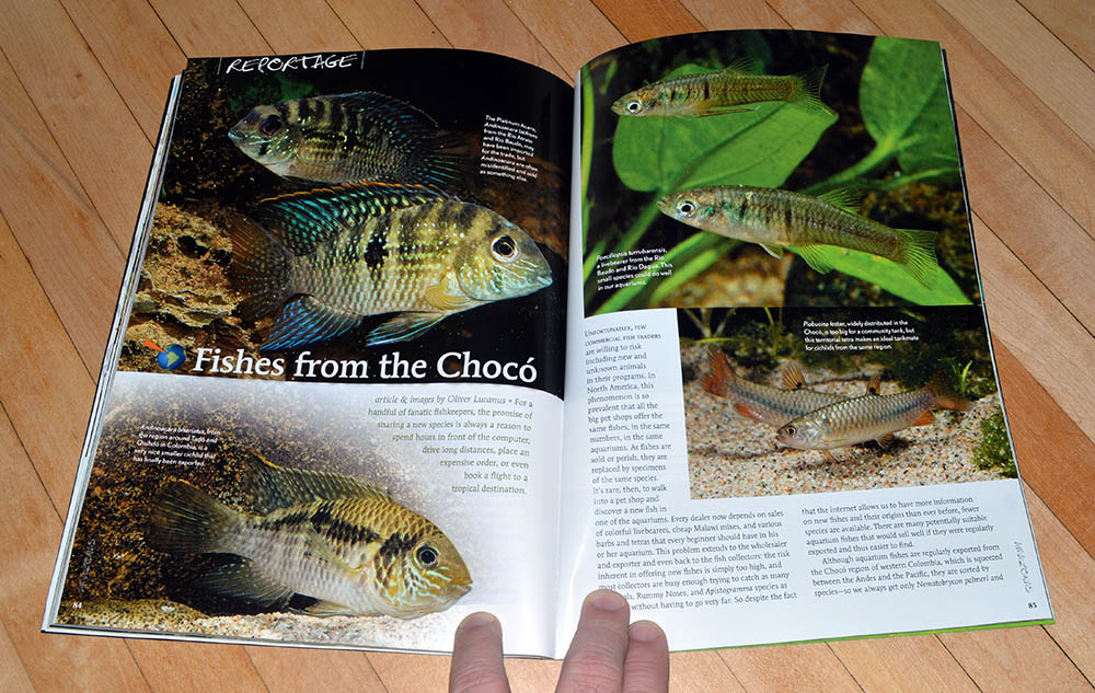 """Fishes from the Chocó"", by Oliver Lucanus, looks at the diversity of species found in the Chocó region of Columbia."