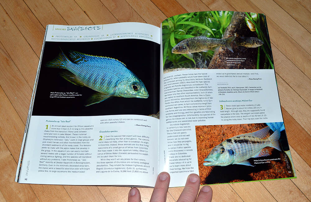 We close out this issue with our Species Snapshots, including Protomelas sp., Grundulus sp., Lichnochromis acuticeps, Nothobranchius milvertzi, Cochliodon sp., and Aphyolebias peruensis, in contributions from Hans-Georg Evers, Stefano Valdesalici, and MIcheal Schlüter
