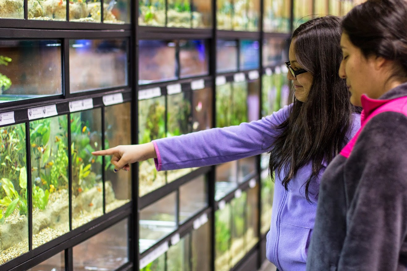 The Florida Tropical Fish Farmers Association display of over 130 tanks at Aquatic Experience - Chicago 2014. Image by Dan Woudenberg/LuCorp Marketing for the World Pet Association.