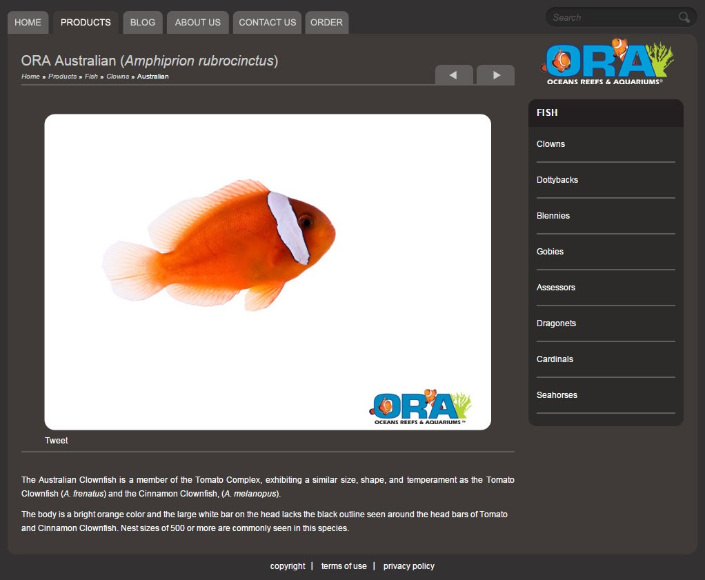 "As late as September 3rd, 2012, ORA still listed and offered  ""A. rubrocinctus"", via materials accessed via Archive.org"