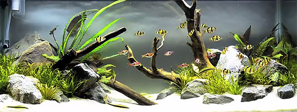 """Beneath The Branches""  - Aquascape by Tyler Koch - Screencapture from YouTube"