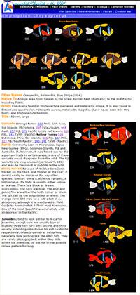 Screenshot of Kylie Waldon's Chrysopterus catalog, preserved via Archive.org