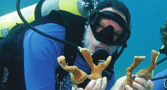 "Ken Nedimeyer showing young maricultured Acropora palmata corals destined for outplanting on Mollasses Reef in the Floriday Keys. From ""Planting Palmata"", CORAL Magazine Sept./Oct. 2012 - image copyright Tim Grollimund"