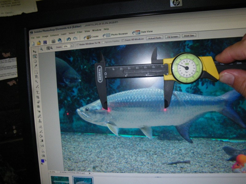 Using dial calipers to measure the size of fish from an on-screen image