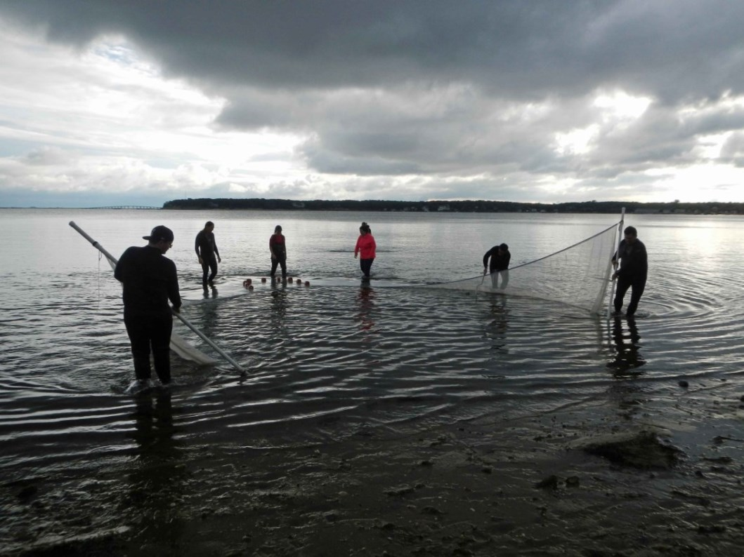 Students and Toledo Zoo staff retrieving a seine in the sea grass flats of Shinnecock Bay, Long Island.