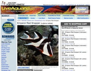 Emperor Red Snapper juvenile, a future tankbuster for sale on the Internet, offered by Live Aquaria.com. This species can grow to 116 cm and 33 kg (46 inches and 72 pounds).