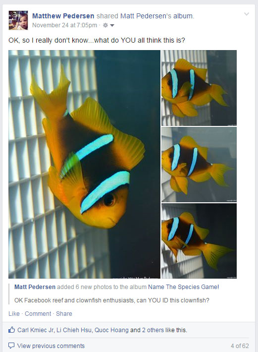 OK Facebook - can you ID this clownfish for me?