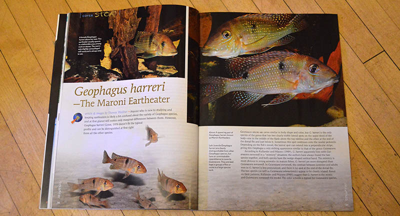 """Geophagus harreri - The Maroni Eartheater"", by Thomas Weidner, takes a look at one of the lesser known Geophagus spp."
