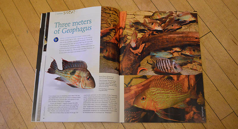 """Three meters of Geophagus"", by Norbert Knaak, looks at keeping a community of mainly Geophagus spp. in a 10 foot long aquarium."