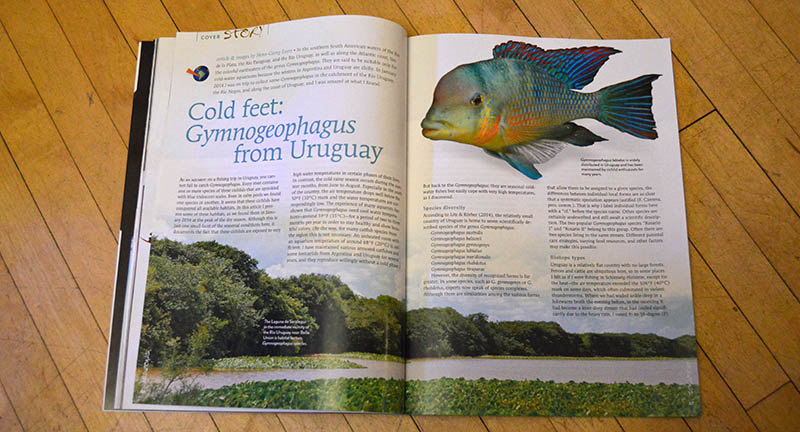 """Cold Feet: Gymnogeophagus from Uruguay"", by Hans-Georg Evers, presents wild Eartheaters in a fish collecting expedition to the Rio Negro and Rio Uruguay basins, aong with coastal areas of Uruguay."