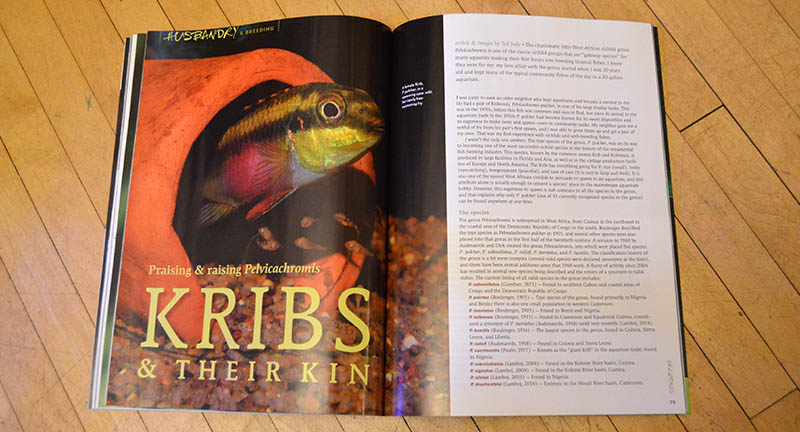 "Who hasn't kept a ""Krib"" at one time or another? Ted Judy brings us ""Kribs & Their Kin: Praising & raising Pelvicachromis"" - an all encompassing review of this genus of very popular dwarf cichlids."