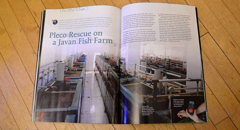 """Pleco Rescue on a Javan Fish Farm"", by Hans-Georg Evers, looks at the professional, commercial breeding of the Zebra Pleco, Hypancistrus zebra, on the Bellenz Fish Farm. We know you want the black & white eye candy, including images of ""xanthoristic"" and ""fine lined"" morphs that could lead to new Zebra Pleco strains in the future, but you'll have to get your hands on a print or digital edition to see those pages!"