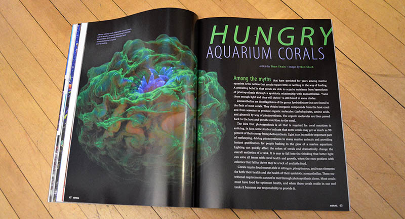 """HUNGRY Aquarium Corals"" by Than Thein walks the reader through three groupings of corals and their dietary proclivities."