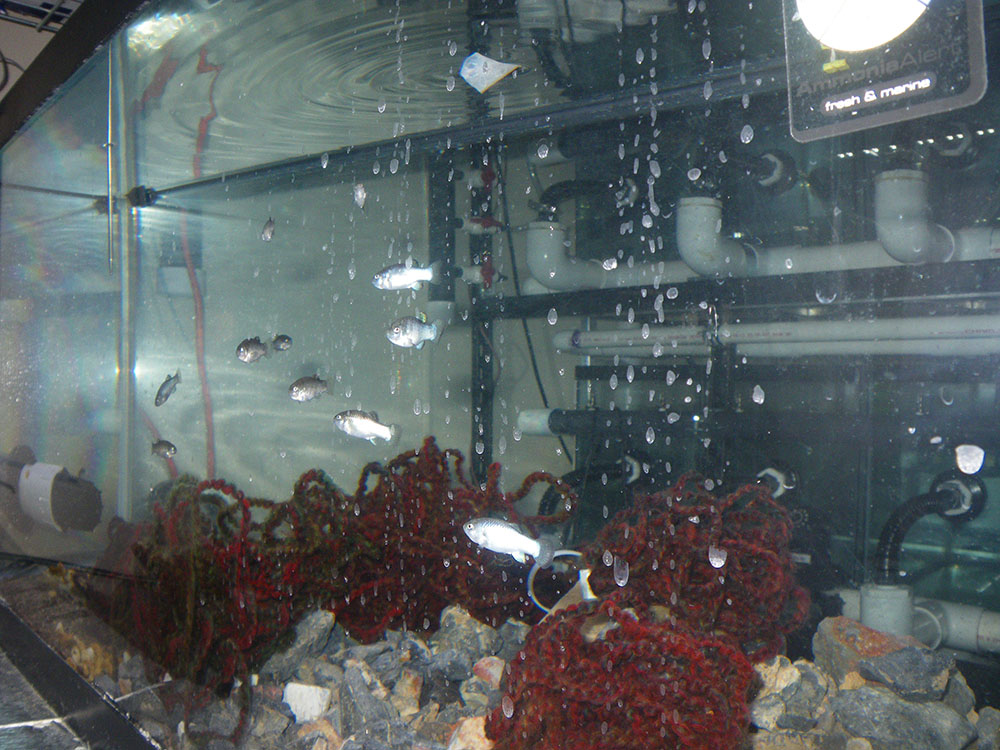 Devils Hole pupfish propagation tank - USFWS | CC-BY-2.0