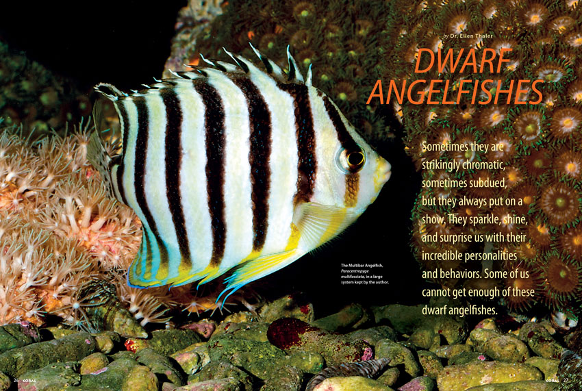 Our cover feature are the Dwarf Angelfishes from the genera Centropyge and Paracentropyge
