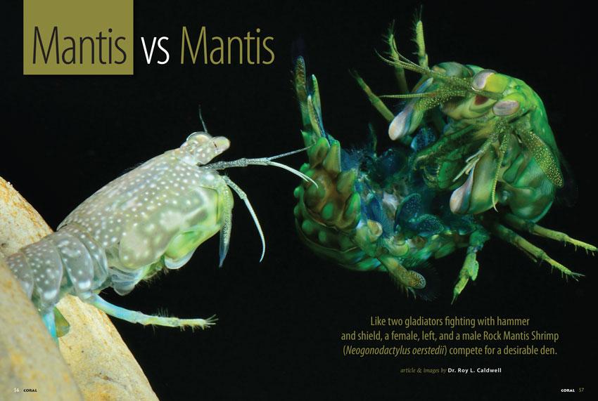Mantis vs. Mantis