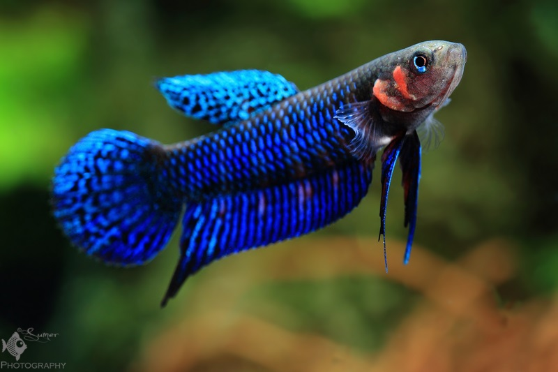 Most Beautiful Freshwater Fish Friday Photospread: Be...