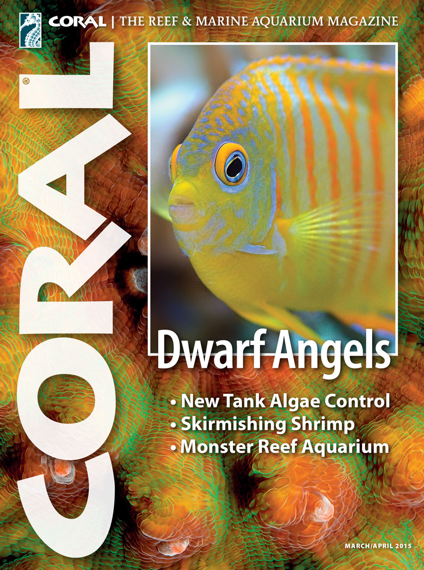 Preview Cover of CORAL Volume 12, Number 2, March/April 2015.