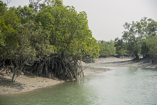 Mangrove trees form the dominant structure of the ecosystem here- both above and below the water