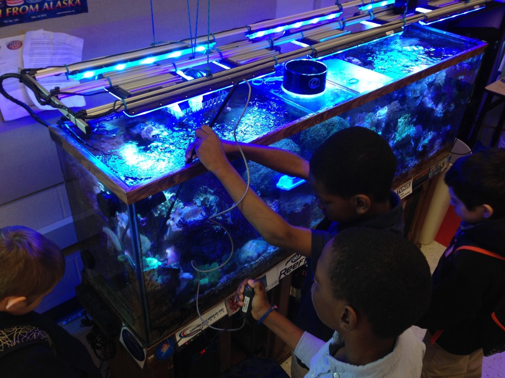 A group of students is standing around a coral reef aquarium. Two male students are using an electric wand to kill unwanted anemones