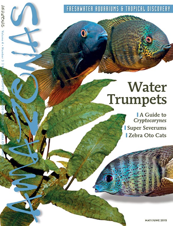 AMAZONAS May/June 2015, arriving in homes and stores in the first week of April.
