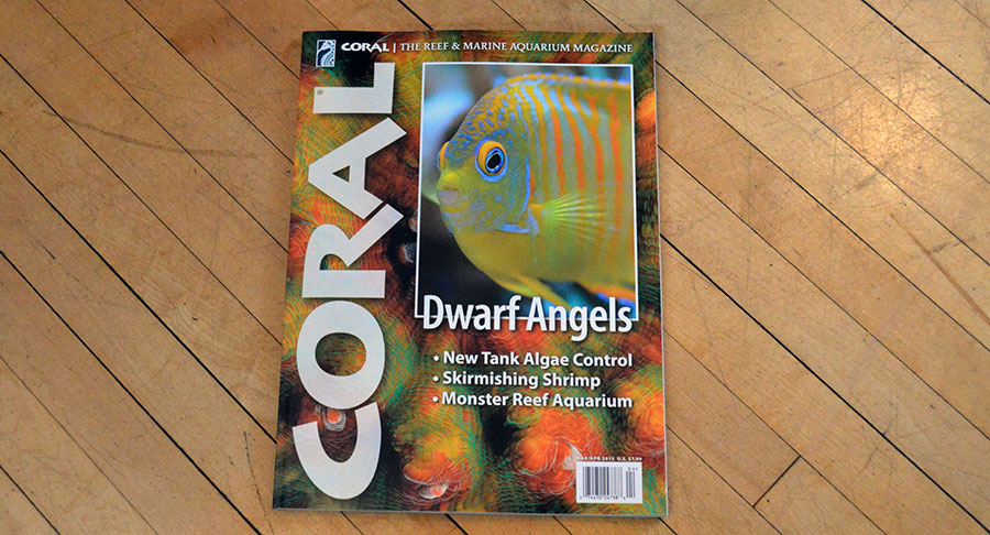 The cover of DWARF ANGELS, our feature for the March/April 2015 issue of CORAL Magazine