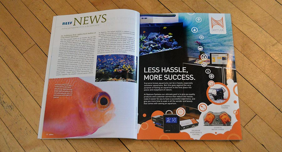 We kick off this issue's Reef News with the Noel Heinsohn's long awaited revelation - what SPECIES is the first captive-bred Anthias?  You'll have to read the story to find out!