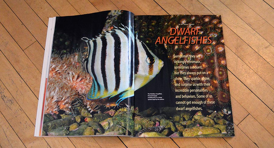 Dr. Ellen Thaler introduces the March/April 2015 CORAL Magazine cover feature, DWARF ANGELFISHES