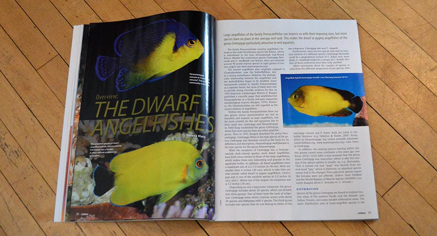 Verena Klein presents a broad Overview: The Dwarf  Angelfishes, in the latest issue of CORAL Magazine.