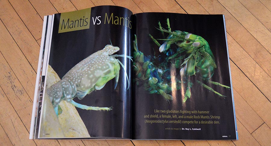 "Dr. Roy L. Caldwell presents an intimate pictorial of a battle between ""Mantis vs Mantis""."