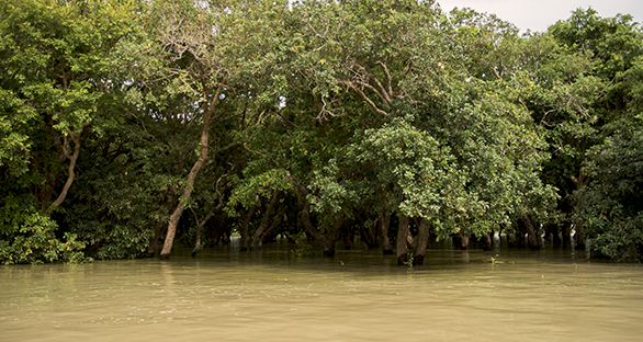 The flooded forest surrounding the center of the lake is dominated by large, predatory species