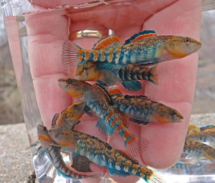 North American Native Fish Association 2015 Convention (OK)