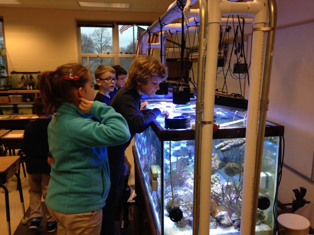 This tank is built with a DIY hanging canopy for lights that can be easily moved to allow full access to the open-topped aquarium. Step stools are kept close by to allow students to access the tank from the top. Viewing screens and long tools like a baster-type pipette allow young students with short arms to reach all areas of the tank.