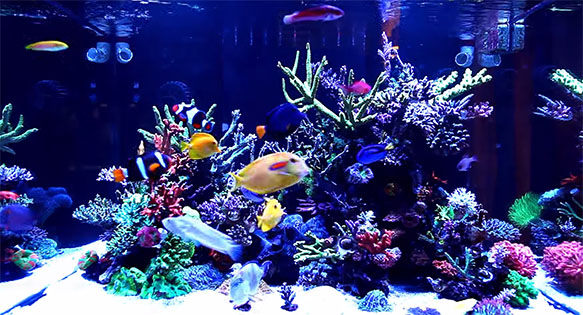 A video still from Gary Lo's 700L reef aquarium in Taiwan.